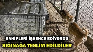 İzmir'de köpeklere işkence yapan kişi gözaltına alındı!