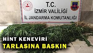 İzmir'de 680 kök Hint keneviri ele geçirildi