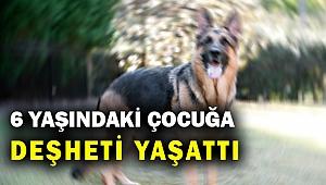 Kemalpaşa'da bir köpek 6 yaşındaki çocuğa ve esnafa saldırdı... 3 kişi yaralandı...