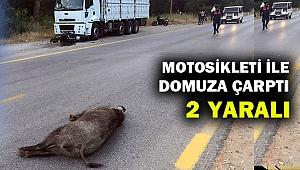 Muğla'da motosiklet domuza çarptı: 2 yaralı