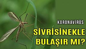 ABD'de sivrisineklerin korona bulaştırma riski araştırıldı