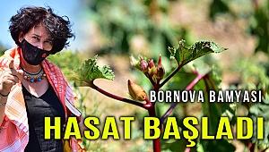 Bornova Bamyasının hasadına Soyer de eşlik etti
