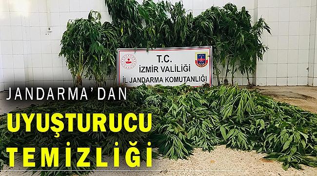 İzmir Jandarması, hint keneviri temizliği yaptı