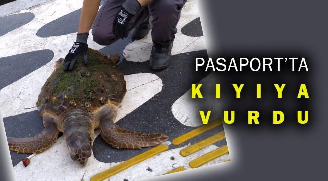 İzmir Pasaport'ta kıyıya vuran caretta caretta kurtarıldı