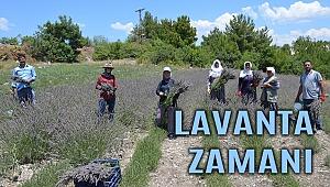 Lavanta yarışına Manisa da katıldı