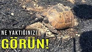 Muğla'da anız yangınında alevlerin ortasında kalan kaplumbağa kurtarıldı