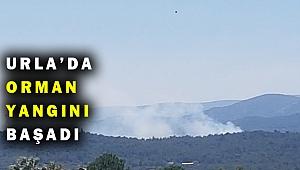 Son Dakika! Urla'da orman yangını çıktı