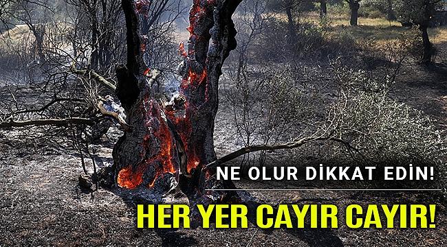 Aydın'da zeytinlik yangını evleri tehdit ediyor