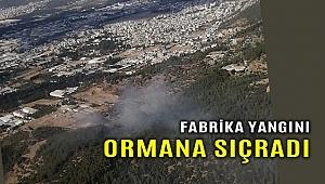 Bornova'da bir fabrikada başlayan yangın kısa sürede ormana sıçradı