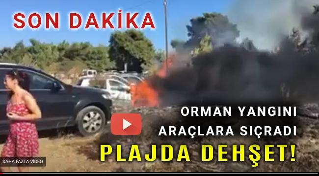 Seferihisar'daki orman yangını Ekmeksiz Plajında denize girenlerin araçlarına sıçradı
