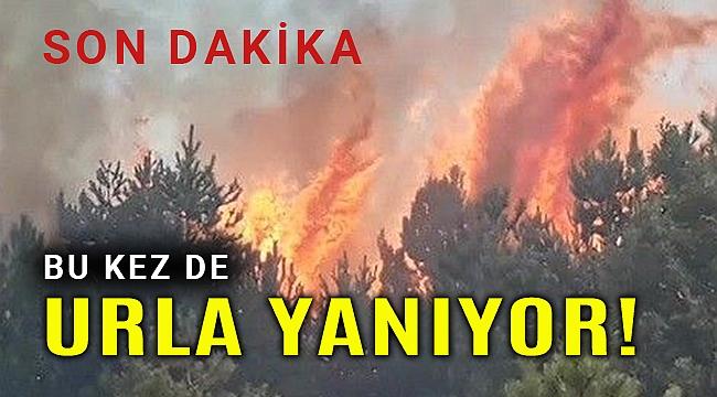 Son Dakika! Urla'da orman yangını başladı
