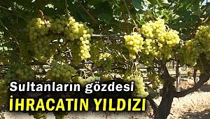 Çekirdeksiz sofralık sultani üzüm ihracatın yıldızı oldu