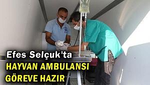 Efes Selçuk'ta hayvan ambulansı göreve başladı