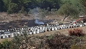 Muğla'da çıkan yangında arı kovanları zarar gördü