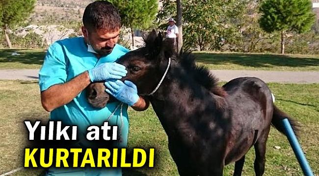 Yavru yılkı atı kurtarıldı