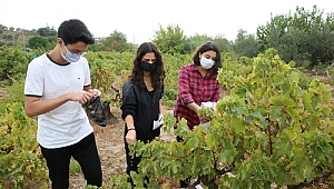 Buca'nın tarımı gençlere emanet