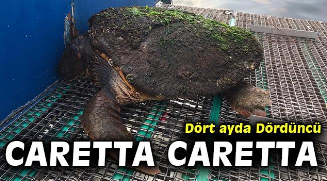 Dört ayda dördüncü Caretta caretta