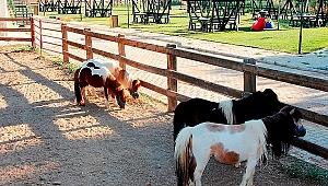 Ödemiş Belediyesi Taypark'ta çocuklar için atla gezinti turları başladı