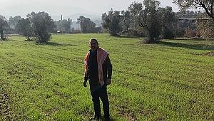 Beydağ'daki karakılçık buğdayları büyüyor