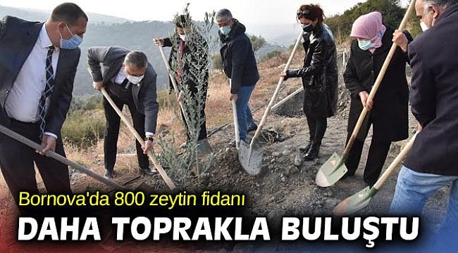 Bornova'da 800 zeytin fidanı daha toprakla buluştu