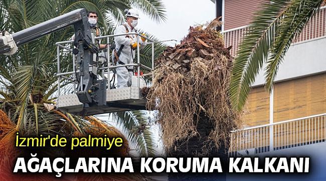 İzmir'de palmiye ağaçlarına koruma kalkanı
