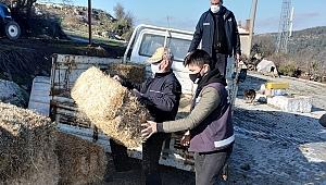Bergama'da yaban hayvanları için doğaya ot bırakıldı