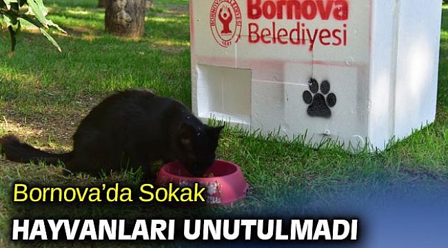 Bornova'da Sokak hayvanları unutulmadı
