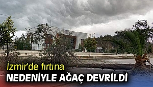 İzmir'de fırtına nedeniyle ağaç devrildi