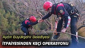 Aydın Büyükşehir Belediyesi İtfaiyesinden keçi operasyonu