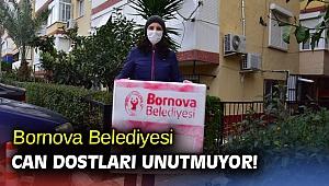 Bornova Belediyesi can dostları unutmuyor!