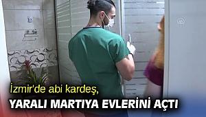 İzmir'de abi kardeş, yaralı martıya evlerini açtı