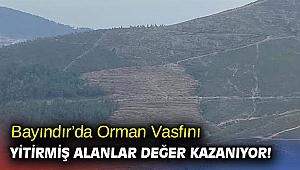 Bayındır'da Orman Vasfını Yitirmiş Alanlar Değer Kazanıyor!