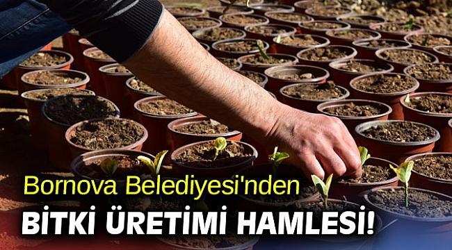 Bornova Belediyesi'nden bitki üretimi hamlesi!