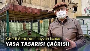 CHP'li Sertel'den hayvan hakları yasa tasarısı çağrısı!