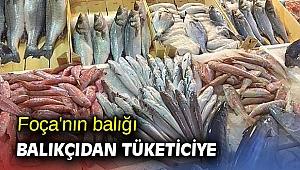 Foça'nın balığı balıkçıdan tüketiciye
