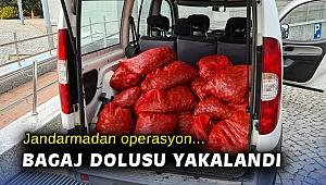 İzmir'de kaçak avlanmış 400 kilogram midye ele geçirildi