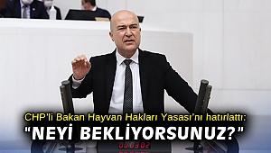 """CHP'li Bakan Hayvan Hakları Yasası'nı hatırlattı: """"Neyi bekliyorsunuz? Getirin oybirliğiyle geçirelim!"""""""