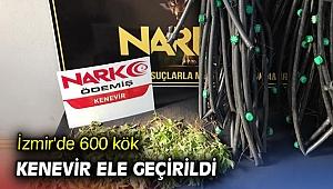 İzmir'de 600 kök kenevir ele geçirildi
