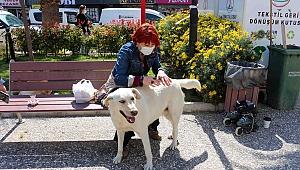 Karşıyaka'da sokak köpekleri rehabilite edilecek
