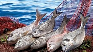 Su ürünleri ve hayvansal mamuller sektörü ihracatta 2,5 milyar doları geçti