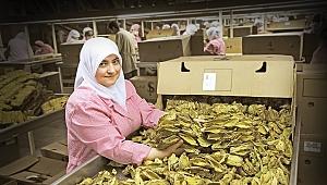 Yaprak tütünde sürdürülebilirlik çalışma grubu kuruldu