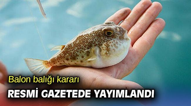 Balon balığı kararı Resmi Gazetede yayımlandı