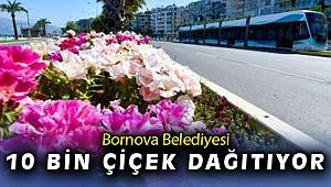 Bornova çiçekleniyor
