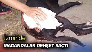 İzmir'de magandalar dehşet saçtı