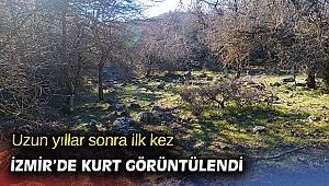 Uzun yıllar sonra ilk kez İzmir'de kurt görüntülendi