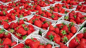 Yaş meyve sebze sektörü tarladan çatala zehirsiz gıda için çalışıyor