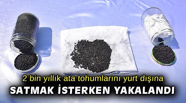 2 bin yıllık ata tohumlarını yurt dışına satmak isterken suçüstü yakalandı
