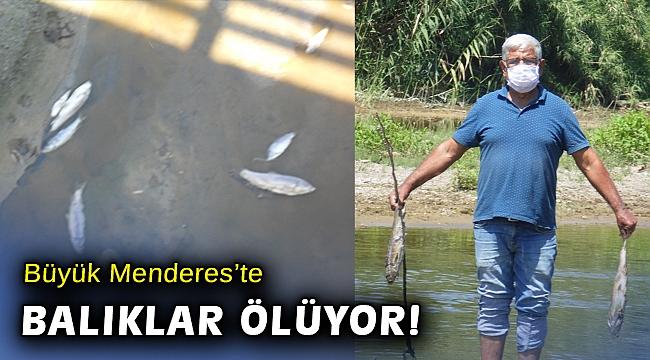 Büyük Menderes'te balık ölümleri başladı