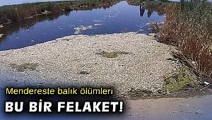 Büyük Menderes'te toplu balık ölümleri tedirgin ediyor