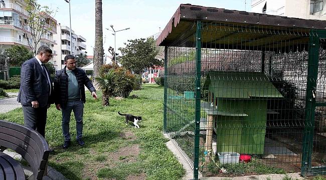 Can dostları 'ev'lendirecek proje: KediYaka